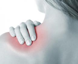 Tendons in shoulder repair